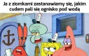 Logika SpongeBoba