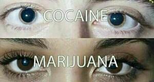 Psi narkotyk