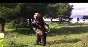 Niedźwiedź z hula hopem