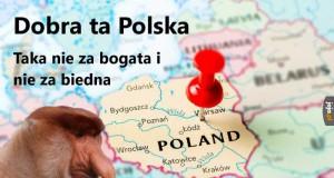 Cały Janusz