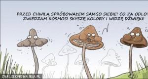 Grzybek po grzybkach