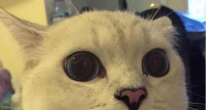 Kocia wersja pieseła - Koteł!