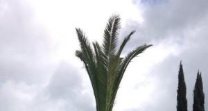 Cóż, oryginalna palma...