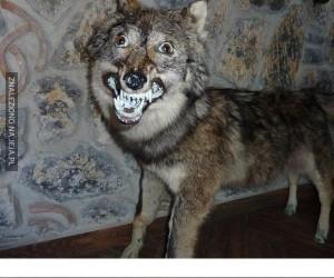Wypychanie zwierząt, robisz to źle!