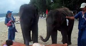 Masaż w wydaniu słoni