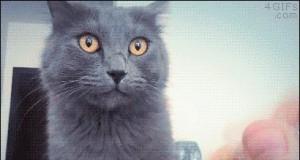 Kot dziwnie reaguje na gniecioną folię