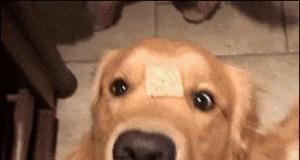 Gdzie moje ciastko? Czy ktoś je widział?