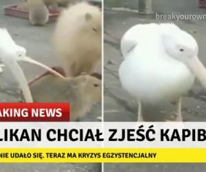 Smutne wiadomości płyną ze świata zwierząt