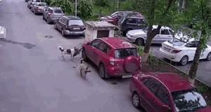 Zaparkowałeś na naszej miejscówce, dupku!