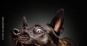 Głodne psiaki łapią przysmaki