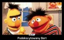 Podekscytowany Bert