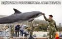 Mężczyzna powstrzymał atak delfina