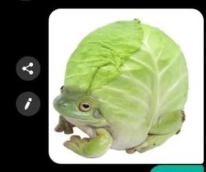Niby żaba, a jednak kapusta