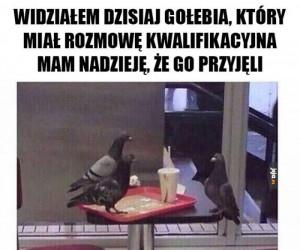 Powodzenia, gołębiu!