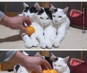 Koteły i piramida mandarynek