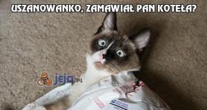 Uszanowanko, zamawiał Pan koteła?