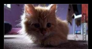 Zwykły kot