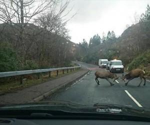 Pojedynek na drodze