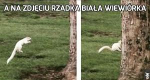 A na zdjęciu rzadka biała wiewiórka