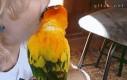 Po co dentysta, skoro można mieć papugę?
