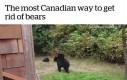 Jak Kanadyjczyk przegania niedźwiedzie