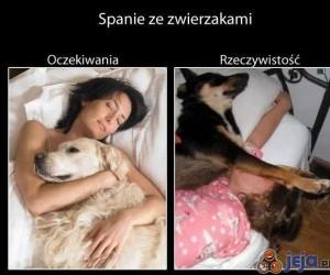 Spanie ze zwierzakami