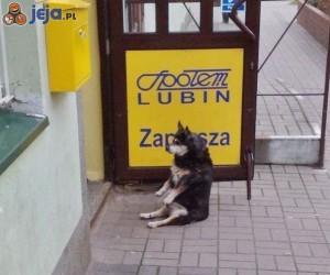 Pies czeka na właściciela