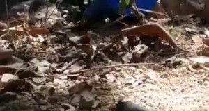 Mrówkom też należy się chwila relaksu