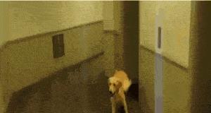 Psie buciki