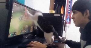 Ach, mieszkanie z kotem nie jest łatwe...