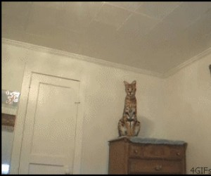 Fajna kocia figu-- O BOŻE!