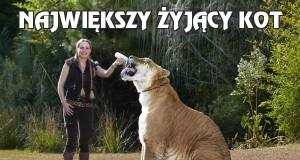 Największy żyjący kot
