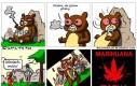 Uwaga: Zjarane niedźwiedzie