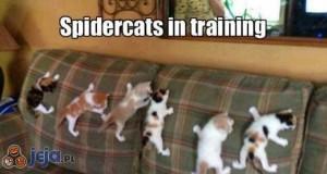 Spidercats