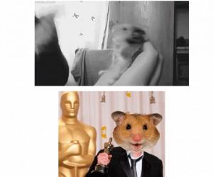 Oscar wędruje do... chomika!