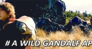 Uwaga, dziki Gandalf atakuje!