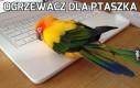 Ogrzewacz dla ptaszka