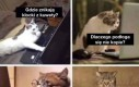 Gdyby koty korzystały z Google