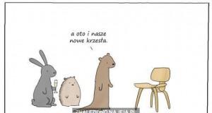 Nigdy nie zapraszaj bobra na parapetówkę