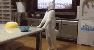 Norbercie, musimy porozmawiać. Jesteś kotem.