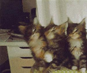 Koty czuja ten beat