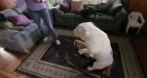 Mój pies ma nową zabawę