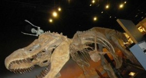 Ujeżdżanie dinozaura