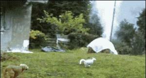 Jak przechytrzyć psa?