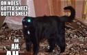 Kichnięcie kota