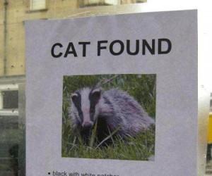 Znaleziony kotek czeka na właściciela