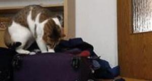 A Ty gdzie się pakujesz?