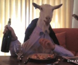 Koza podczas obiadu