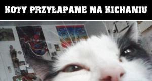 Koty przyłapane na kichaniu