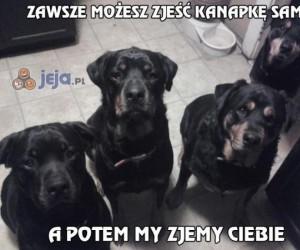 Wada posiadania dużych psów...
